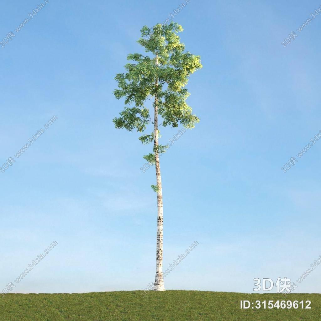 格式是max 2007,建议使用3dmax 2012 软件打开,该树图片素材大小是7.