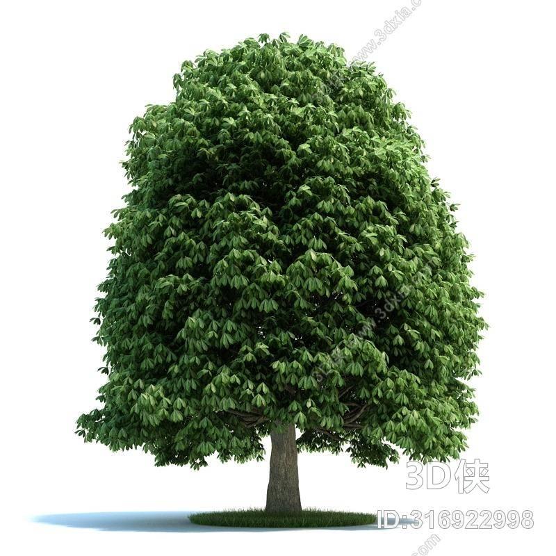 格式是max 2008,建议使用3dmax 2012 软件打开,该景观树图片素材大小