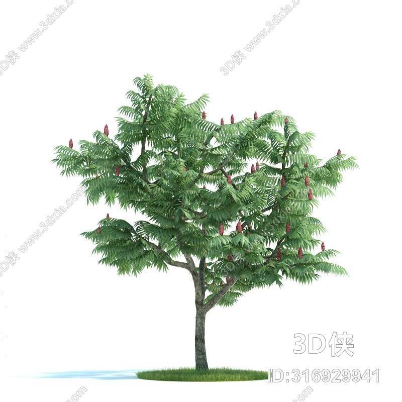 格式是max 2007,建议使用3dmax 2012 软件打开,该景观树图片素材大小
