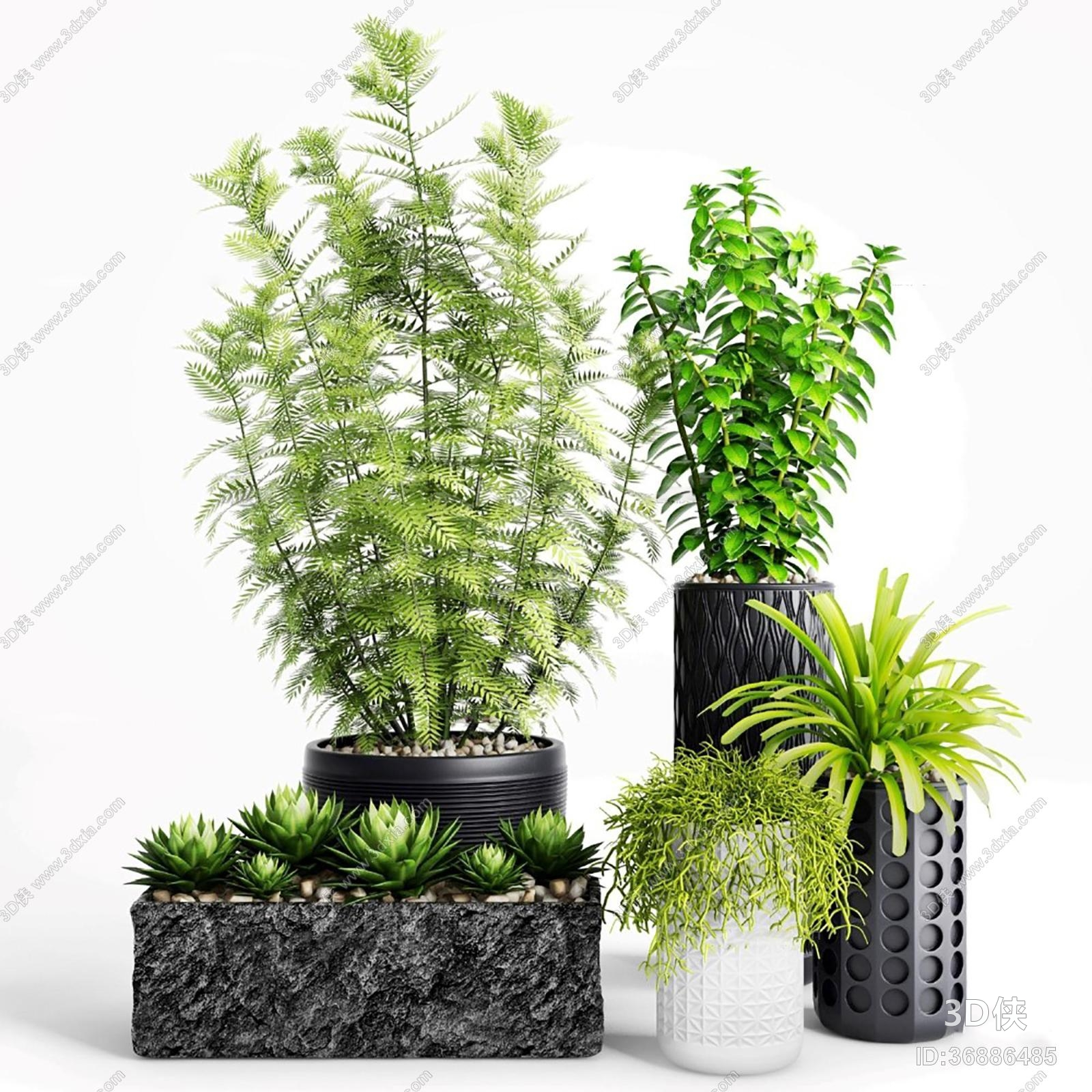 盆栽效果图素材免费下载,本作品主题是现代多肉绿植盆栽组合3d模型