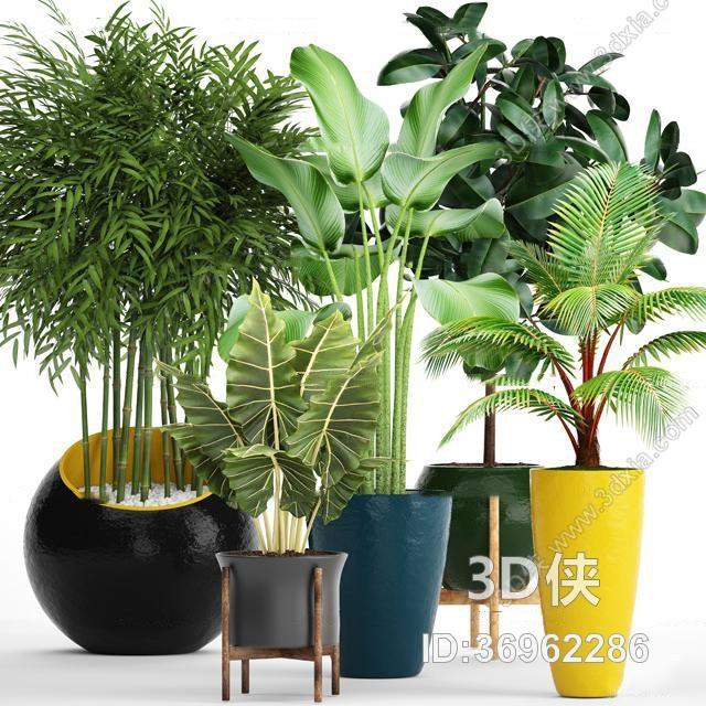 盆栽效果图素材免费下载,本作品主题是现代苏铁竹子绿植盆栽组合3d
