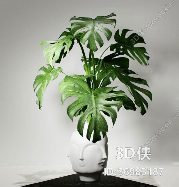 盆栽效果图素材免费下载,本作品主题是现代龟背竹头像盆栽3d模型,编号