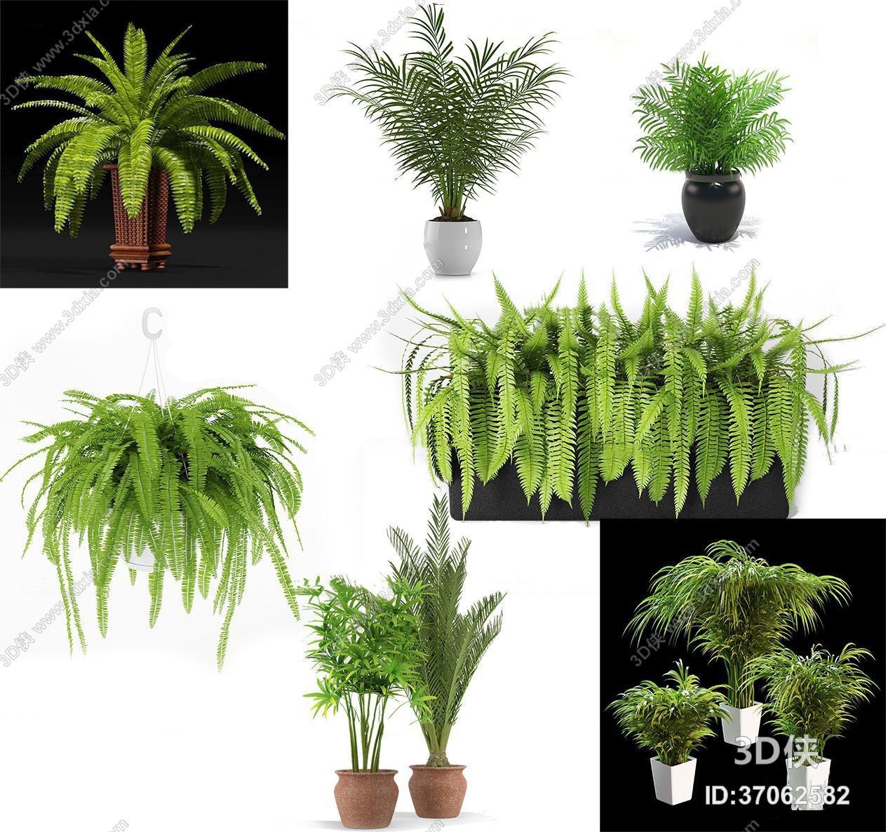 盆栽效果图素材免费下载,本作品主题是现代蕨类绿植盆栽组合3d模型