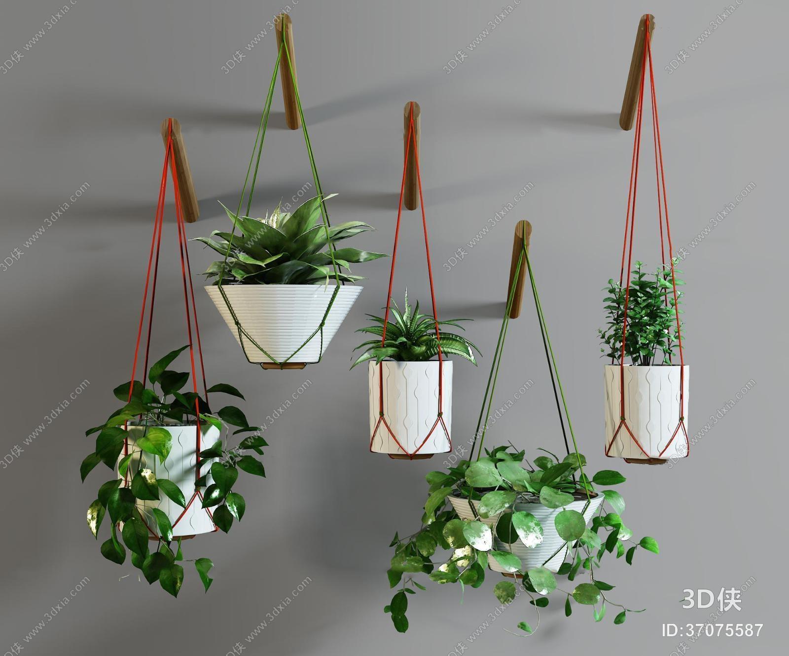 盆栽效果图素材免费下载,本作品主题是现代绿萝吊篮盆栽组合3d模型