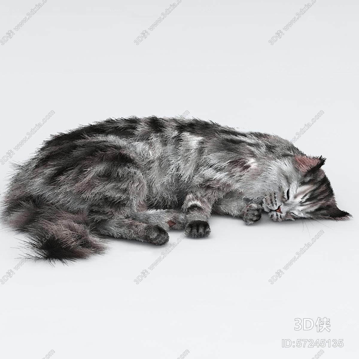 现代猫宠物动物3d模型【id:57245135】