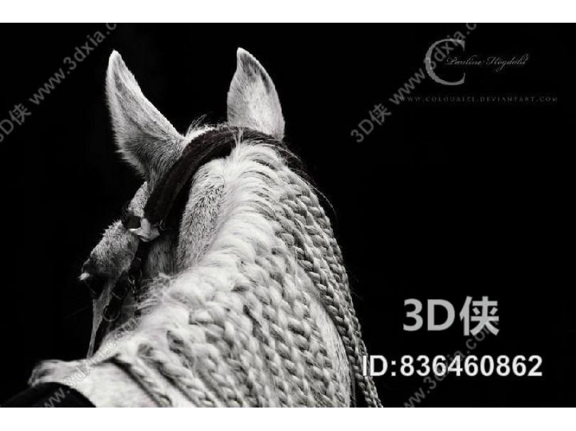 装饰画-动物 16