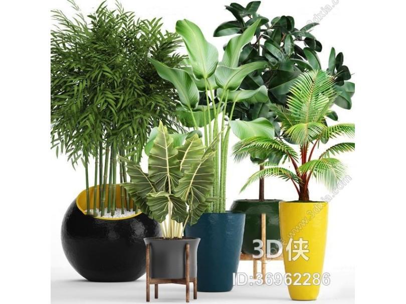 现代苏铁竹子绿植盆栽组合3D模型