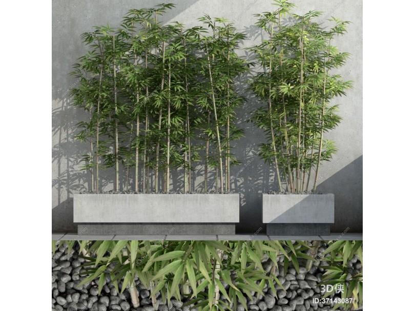 现代室外竹子3D模型