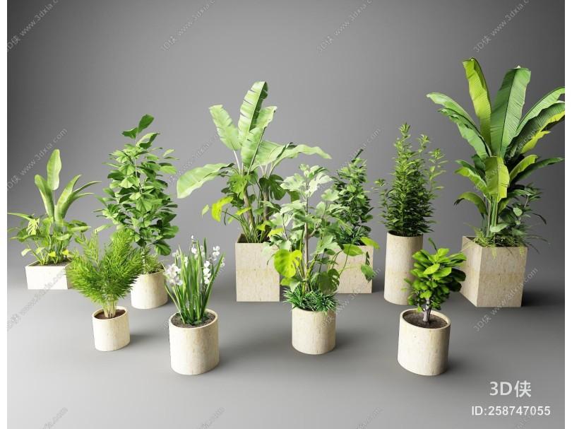 北欧盆栽绿植 盆景 花草植物