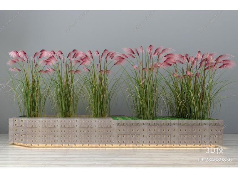 现代绿植 花卉 盆景