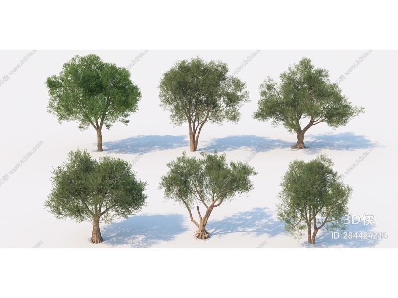 现代景观树 园林树 公园树