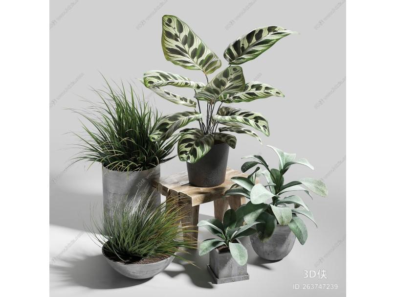 现代盆栽花盆
