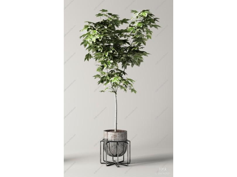 现代绿植盆栽组合