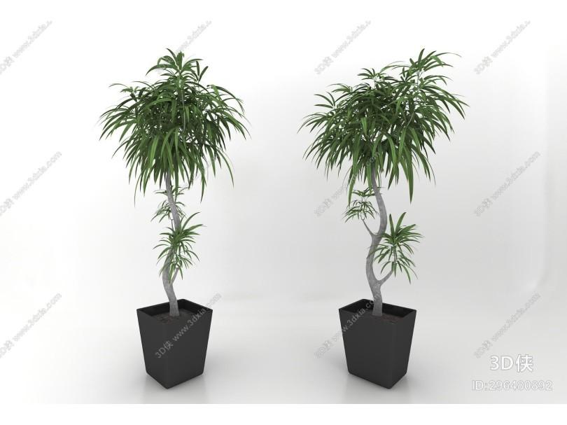 现代风格植物盆栽