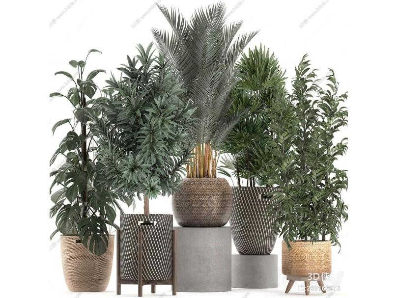 现代绿植盆栽摆件