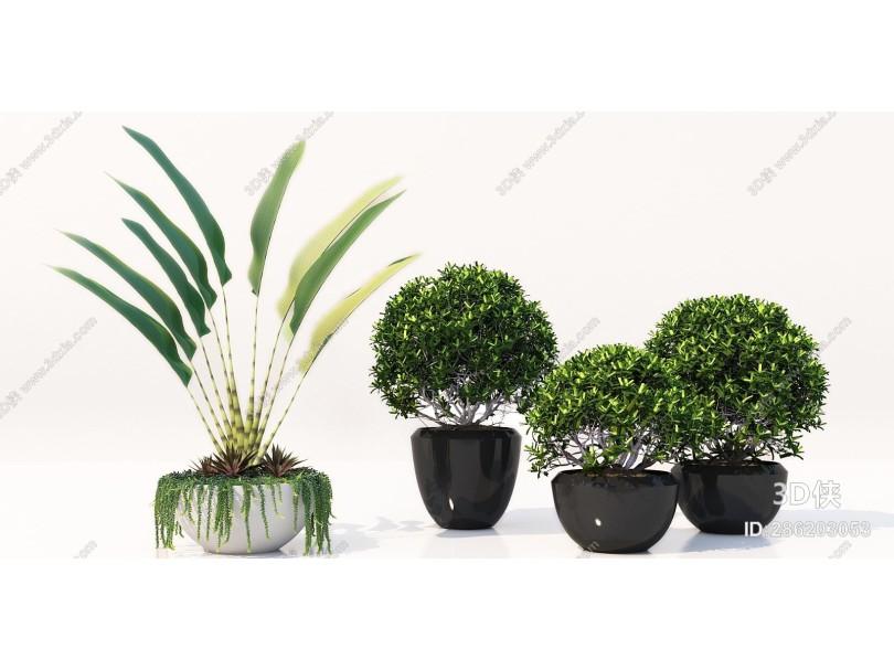 现代盆栽盆景 植物