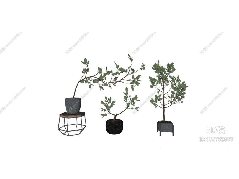现代简约盆栽